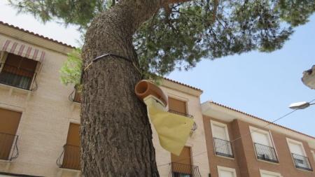 Trampa de feromonas en el pino situado ante el Centro de Mayores de Manzanares