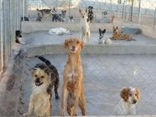 Canes en las instalaciones de Carea