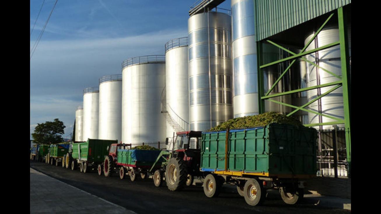 Campaña vendimia. Los cosecheros deben cuidar el transporte de las uvas y que no caiga sobre la calzada