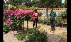 Isabel Díaz-Benito y Manuel Muñoz en la rosaleda del parque