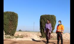Replantación de cipreses para regenerar las zonas verdes
